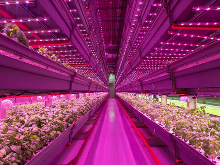 Vertical Farming? What is it and what are the benefits?