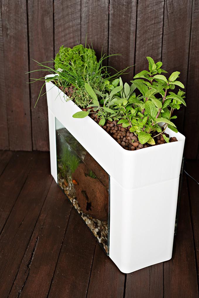 Companion plants in Aquasprouts