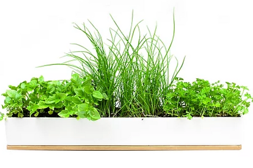 Windowsill Gardens Herbs & Microgreens