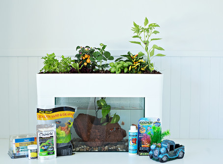 Recommended Plants and Fish in Aquaponics