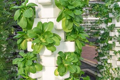 About Vertical Farming. jpg