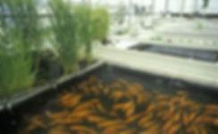 flora-grass-plant-reed-vegetation-buildi