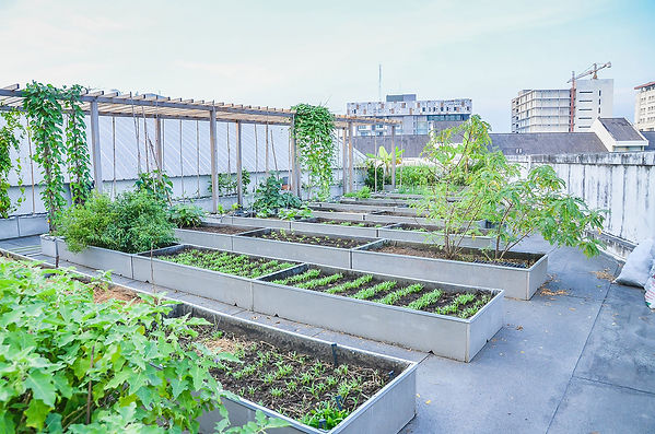 GREEN-FARM.jpg