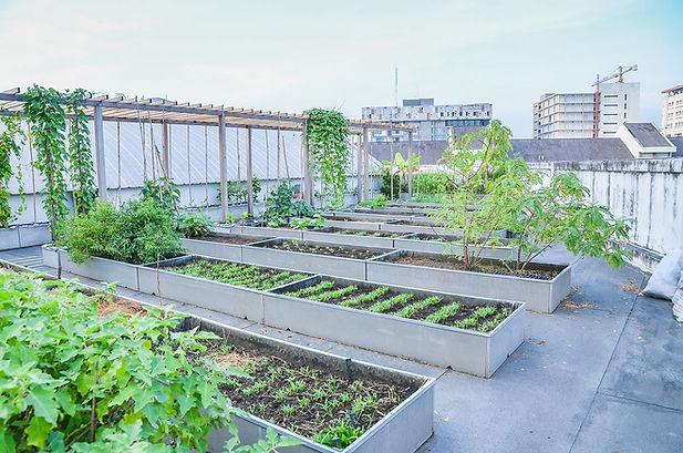 Urban Green Farms Roof Top Urban Farms