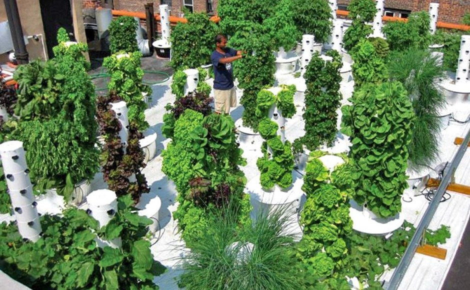 Vertical Farm on rooftop with Hydroponics in Australia, Melbourne