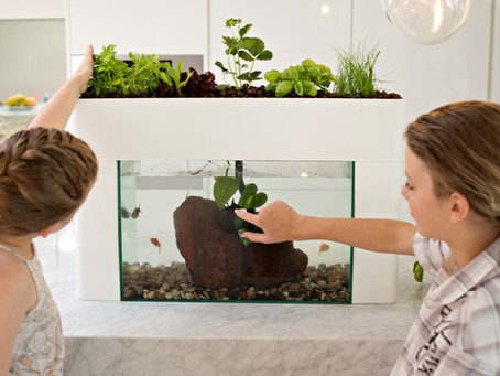 Aquaponics: The Cost-Effective, fun, interactive way to grow plants indoors!