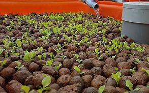 AQUAPONICS Clay Balls.jpg