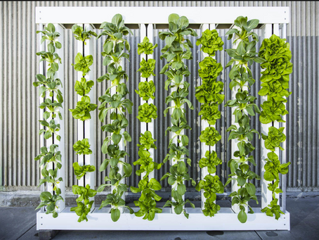 5 BENEFITS OF VERTICAL FARMING: THE FUTURE OF AGRICULTURE?