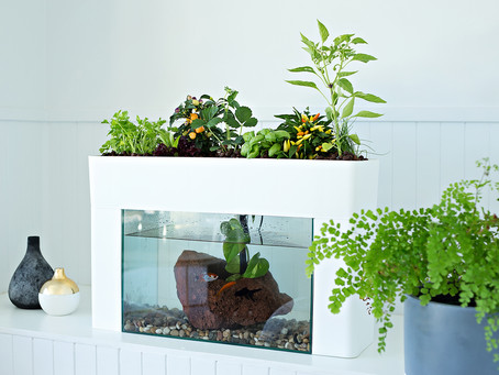 Aquaponics: What you'll need to get started!