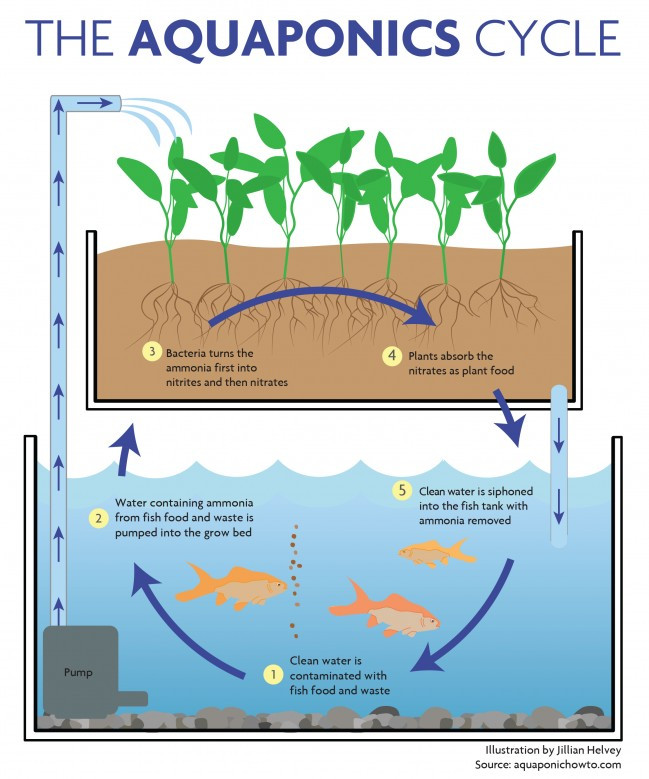 How Aquaponics works and why?