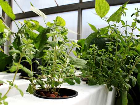 How Does Hydroponic Gardening Work?
