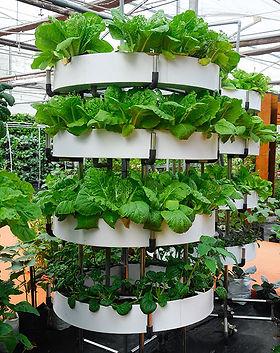 vertical-gardens.jpg