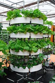 vertical-farming Urban Green farms.jpg