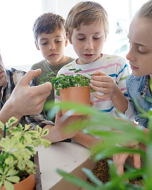 Aquaponics and Hydroponics courses Austr