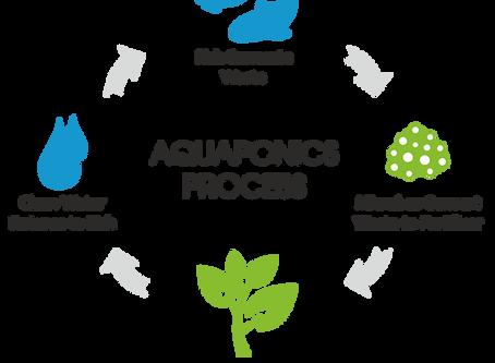 Aquaponics: 10 Best Fish & Plants to use!
