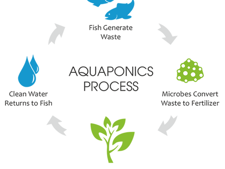 Aquaponics: 10 Best Fish & Plants to use!