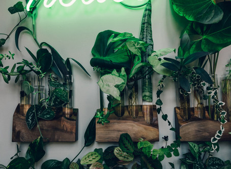 Urban Green Farms: 10 Best plant loving Instagrams to follow for a green fix.