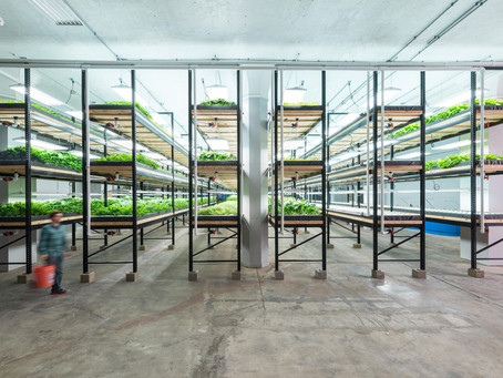 Hydroponics: The Future of Farming & Why We Need to Start Listening!