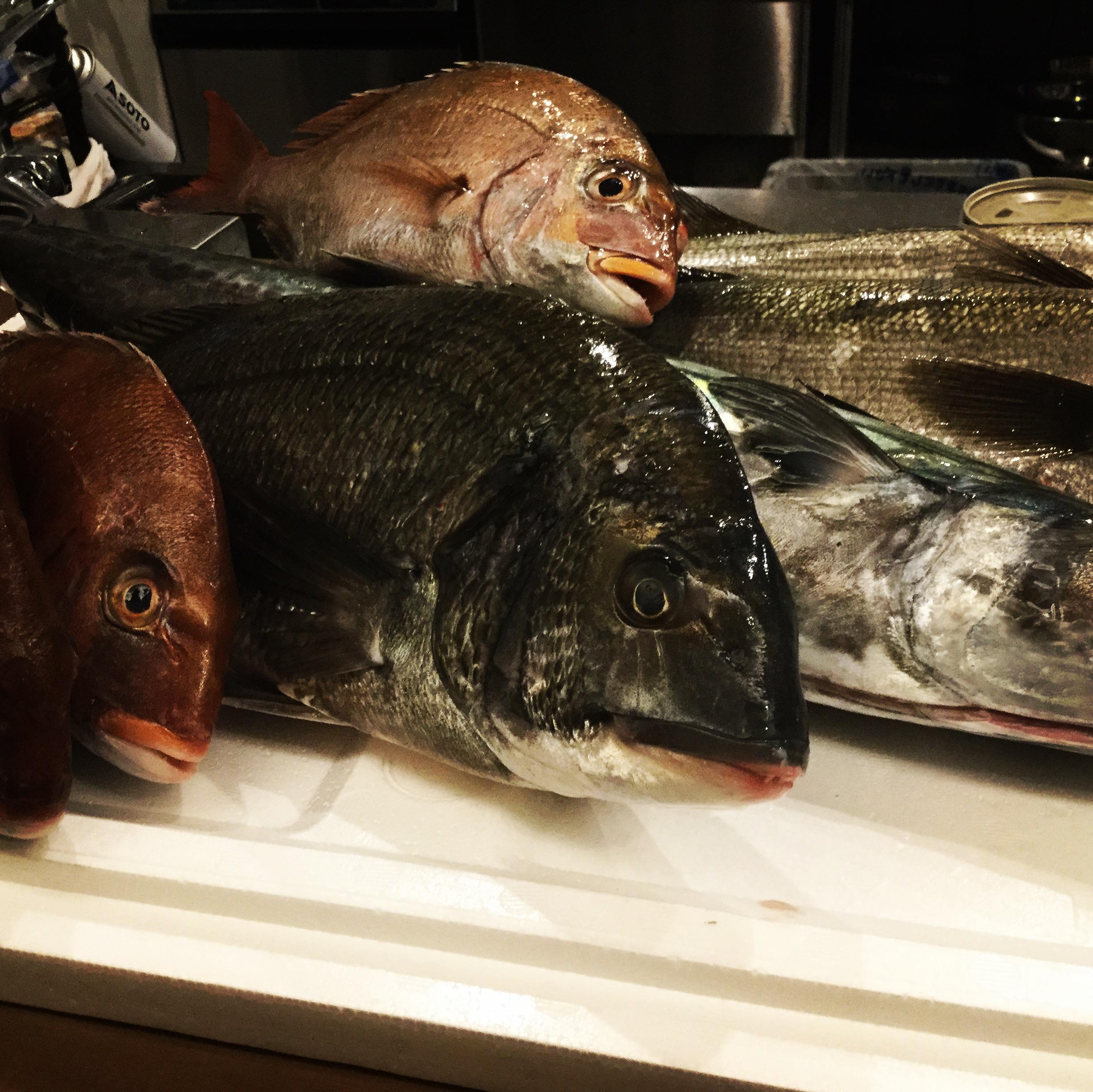 三陸、瀬戸内のお魚。神経締め。