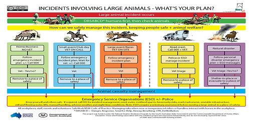 Horse SA incidents involving animals1702