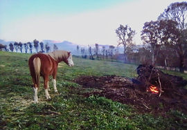 horse and fire.jpg