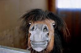 nosey pony News.jpg