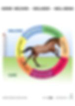HR_Horse Welfare - circle diagram A4.jpg
