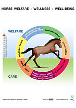 HR_Horse Welfare - circle diagram A4.jpg