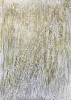Grasses series 5