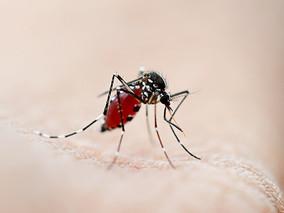Palestra - Prevenção e sintomas da Febre Amarela, Dengue e Chikungunya