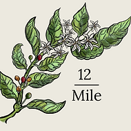 12 Mile (2).png