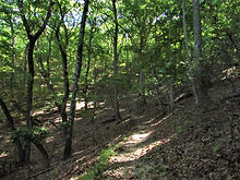 Carvins Cove Trail.jpg