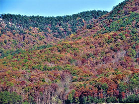 Fall Foliage at the Cove.jpg