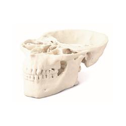 ProJet_CJP_360_Monochrome_Medical_Skull_Model_300px.jpg