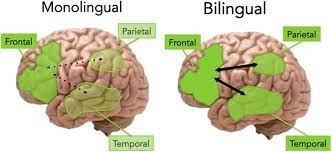 Multilingual kids (0-2 years old)