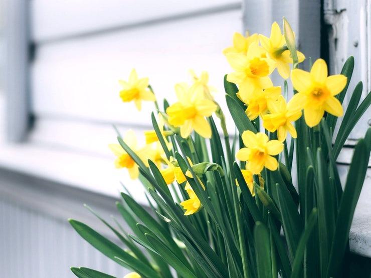 beautiful-bloom-blooming-1018048_edited.