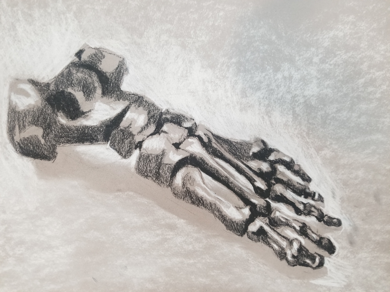 5 Value Skeletal Study Demo