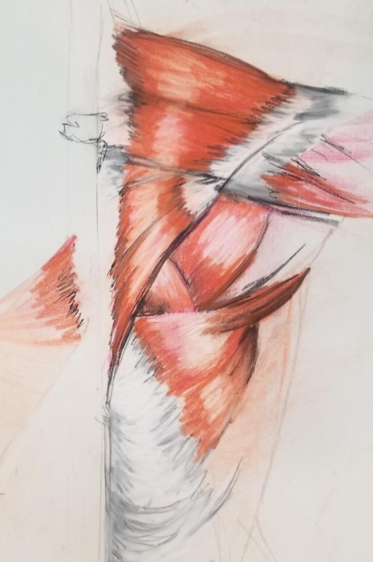 Anatomy Muscle Study Demo