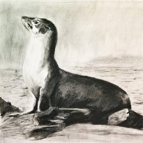 Nado Sea Lion