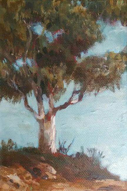Helix Eucalyptus