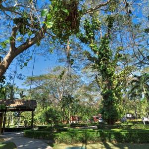 Trees-9236 (2) .jpg