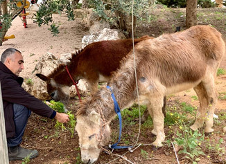 Another two little donkeys, found beaten and abused....