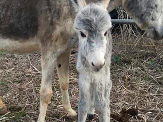 A fluffy surprise: meet litte Molly!