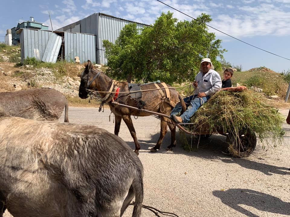 A mule arrives pulling his cart as donkeys wait their turn for treatment