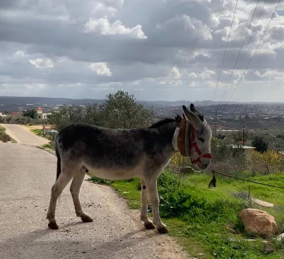 Another little donkey waits his turn