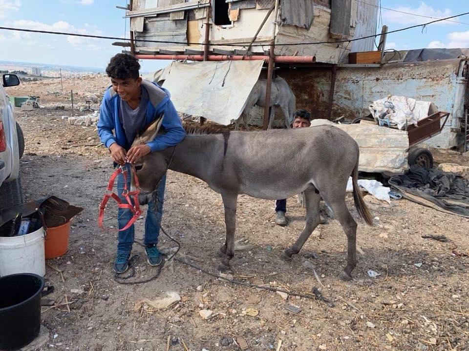 Donkey Outreach Al Razaz