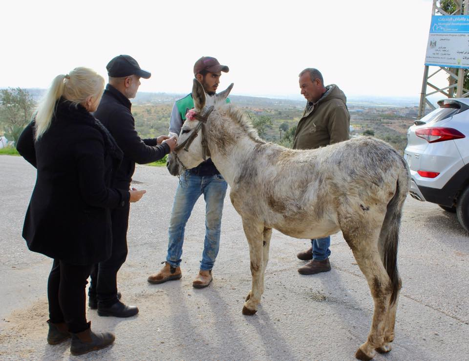 Trying to discuss why this donkey had just been thumped, and why he is too scared to take a carrot, when he has always loved carrots at our previous clinics here