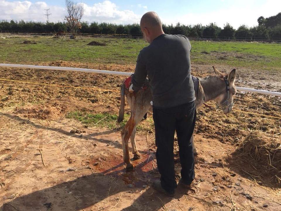 The vet working on Michael's rump wo