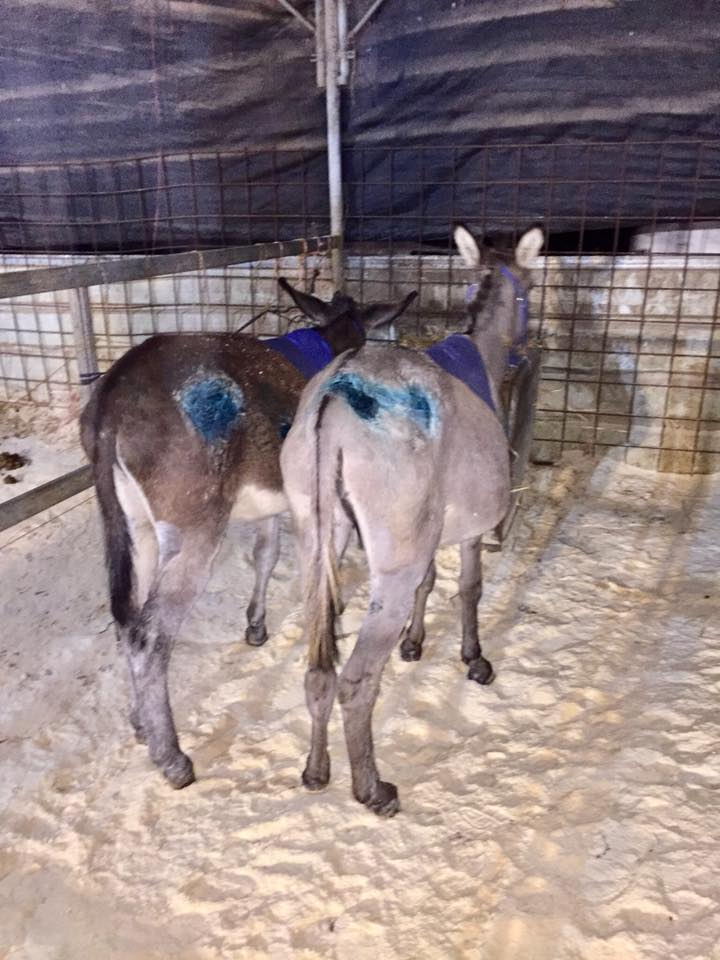 Elijah, left and Jeremiah all bandaged up and enjoying their dinner together