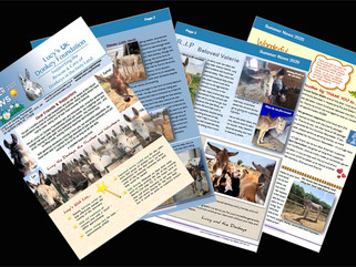 Our Summer Newsletter is out!